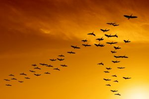 Flock of migrating birds signifying leadership